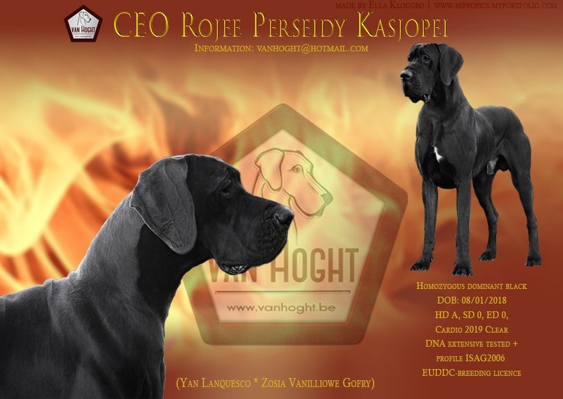 CEO ROJEE poster fire